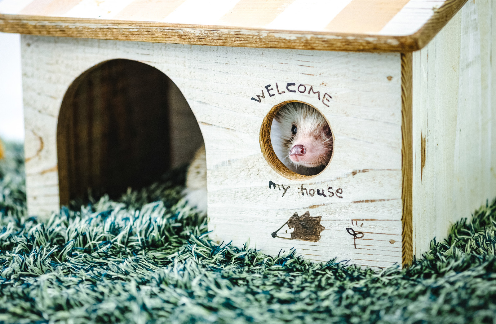ねずみの家の画像