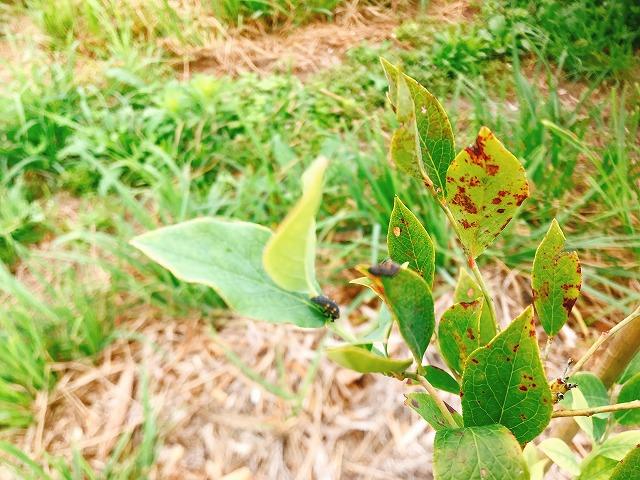 テントウムシの幼虫の画像