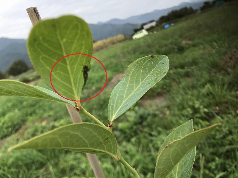 クモの画像3