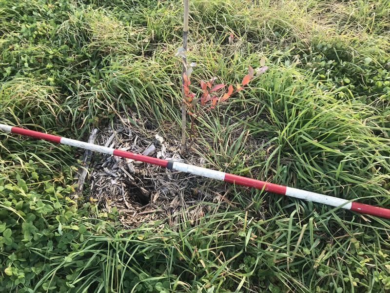 モグラの穴の写真