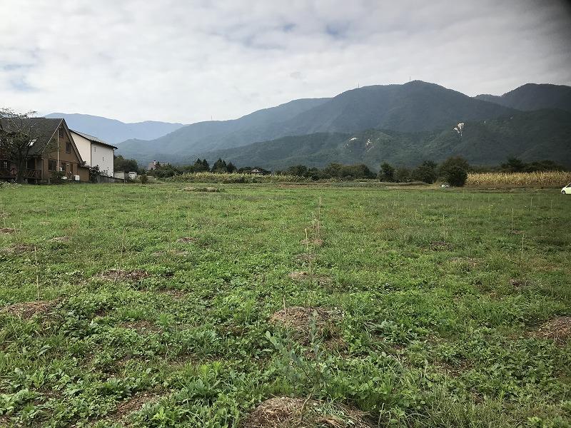 ブルーベリー畑の画像